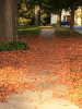 Canton-Autumn-Leaves.png