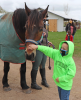 Canton-Honey-Dew-Acres-Derby-Day-boy-petting-horse.png