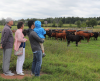 Canton-Northern-Limits-Farm-cows-1.png