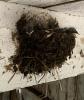Canton-barn-swallows.png
