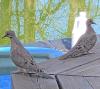 Canton-birds.png