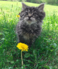 Canton-cat-flower.png