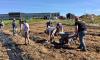 Canton-garden-volunteers.png