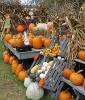 Canton-pumpkins.png