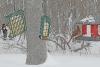 Canton-snow-birds.png