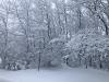 Canton-snow-yard.png