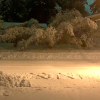 Canton-tree-snow.png