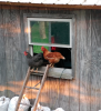 Chase-Mills-chickens.png