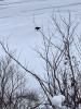 Colton-eagle.png