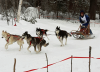 Colton-sled-dogs.png