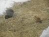Colton-squirrels.png