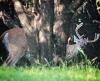 Deer-Pierrepont.png