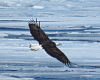 Eagle-ice-Massena.png