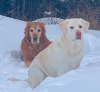 Edwards-dogs-snow.png