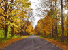 Foliage-road-Potsdam.png