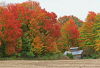 Giffin-Rd.-Canton-leaves.png