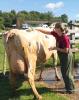 Gouverneur-Dairy-Judging.png