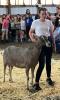 Gouverneur-Fair-Goats.png