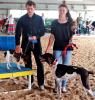 Gouverneur-Fair-senior-dogs.png