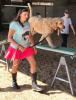 Gouverneur-dog-show-Golden-Doodle-at-fair.png