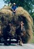 Heuvelton-Amish-haying.png