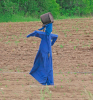 Heuvelton-Amish-scarecrow.png