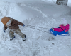 Heuvelton-snowday.png