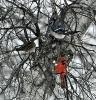 Lisbon-birds.png