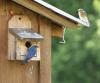 Lisbon-bluebirds.png