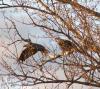 Lisbon-eagles.png