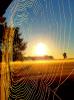 Lisbon-spider-web.png