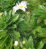 Lisbon-spiderweb-WS.png