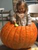 Louisville-pumpkin.png