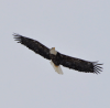 Madrid-Eagle.png