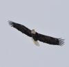 Madrid-Eagle.png
