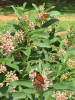 Madrid-Monarch-butterfly-photo.png