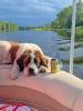 Madrid-dog-boat.png