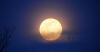 Madrid-moon-geese.png