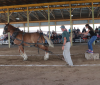 Madrid-museum-horse-pull-Trudy-Gordon-Lady-2.png