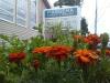 Massena-Library-Garden.png