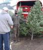 Massena-WS-Breezy-Maples-Farm-tree-sale-2.png