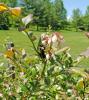 Massena-bee-flower.png