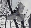 Massena-bird.png