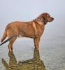 Massena-dog-walk.png