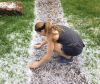 Massena-hail.png