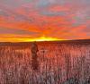 Massena-hunting-sunrise.png