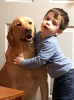 Morristown-Boy-and-His-Dog.png