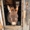 Nicholville-donkey.png