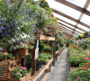 Norwood-R-&-R-Greenhouse-2.png