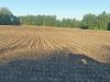 Norwood-corn-field.png